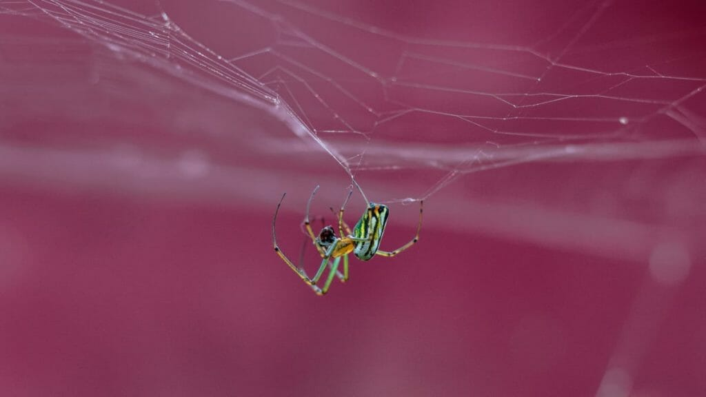 Spider Building Its Web As An Example Of Perfection